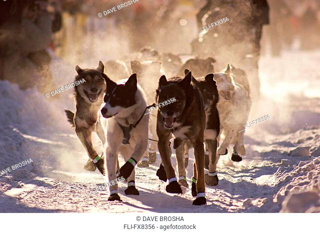 One of the many dog teams participating in the 2007 Yukon Quest - a 1000 mile race from Whitehorse, Yukon to Fairbanks, Alaska