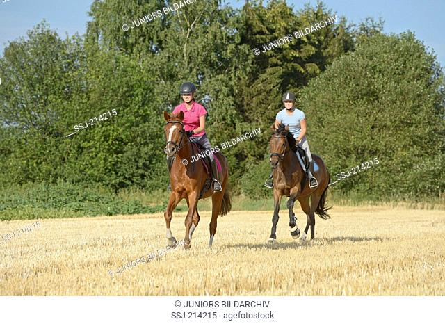 Bavarian Warmblood and Trakehner. Two young riders on horseback galloping on a stubble field. Germany