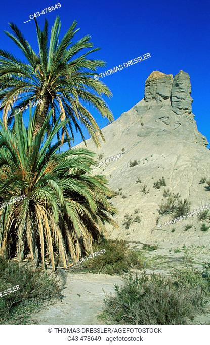 Bare ridges of eroded sandstone and palm trees in the Tabernas Desert, Europe's only true desert. Province of Almería, Andalucía, Spain