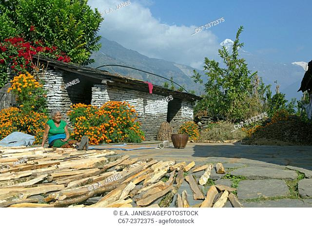 Wood drying near mountain village of Ghandruk in the Modi Khola Valley at around 2000 metres with Annapurna in background