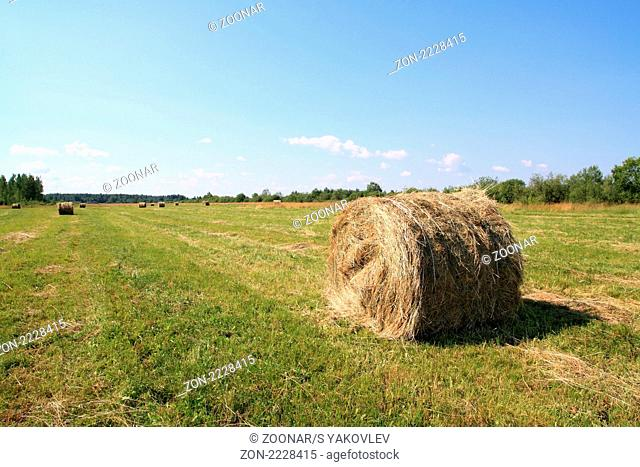 hay on field