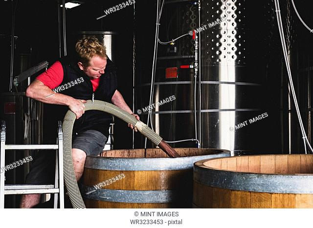 Man working at a winery, holding hose, pumping wine into a large oak barrel