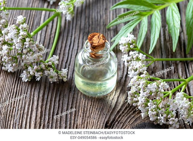 A bottle of essential oil with fresh blooming valerian plant