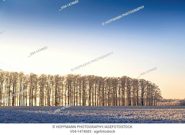 Winter landscape, Lower Saxony, Germany, Europe