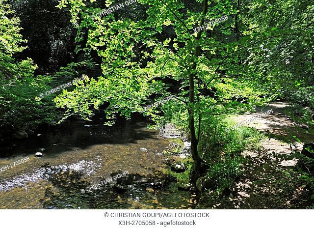 Giber A stream in the Moesgaard Forest, Aarhus, Jutland Peninsula, Denmark, Northern Europe