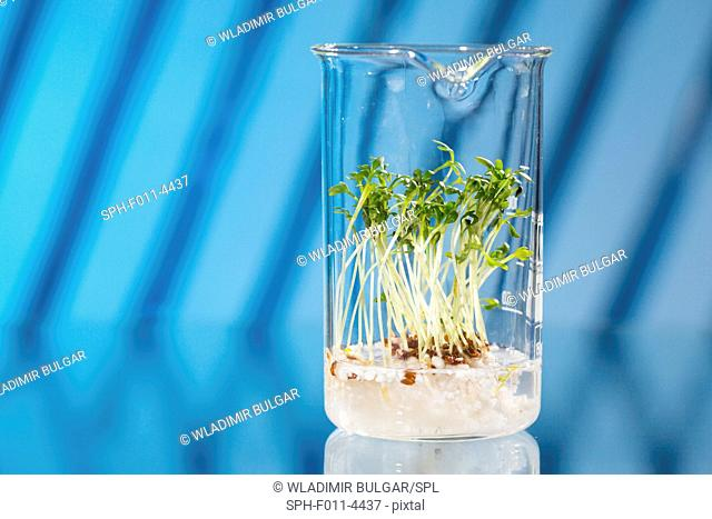 Plants growing in a beaker in a laboratory