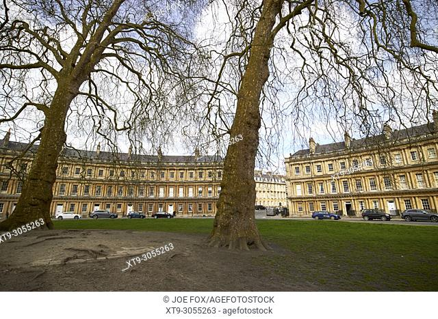 plane trees and old stone centre of the circus historic street of georgian townhouses in Bath England UK