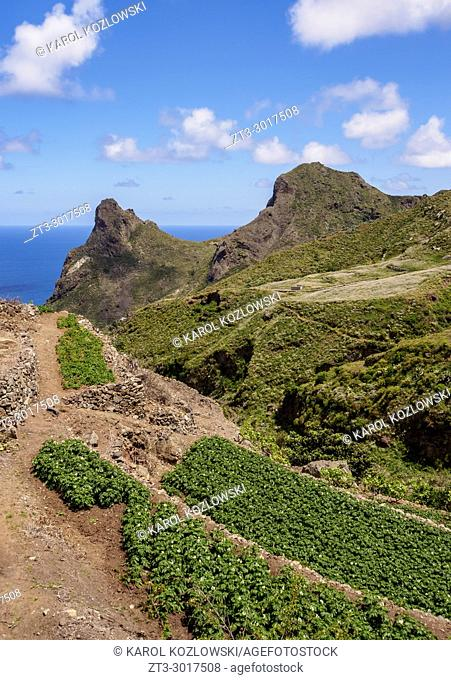 Field in Anaga Rural Park, Tenerife Island, Canary Islands, Spain