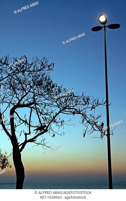 lamppost and tree, Marmara Sea, Istanbul, Turkey