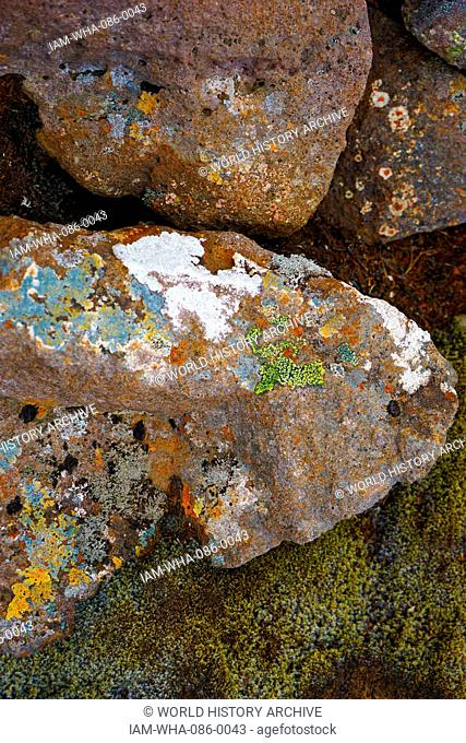 Samples of moss and algae on volcanic rock, Iceland. Dated 21st Century