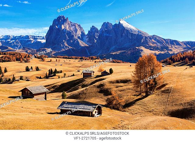 Europe, Italy, South Tyrol, Alpe di Siusi - Seiser Alm. Autumn colors on the Alpe di Siusi - Seiser Alm with the Sella, Sassolungo/Langkofel and the...