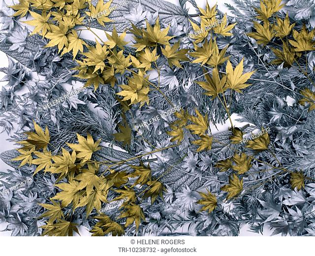Silver & Gold Leaves On Silver Background