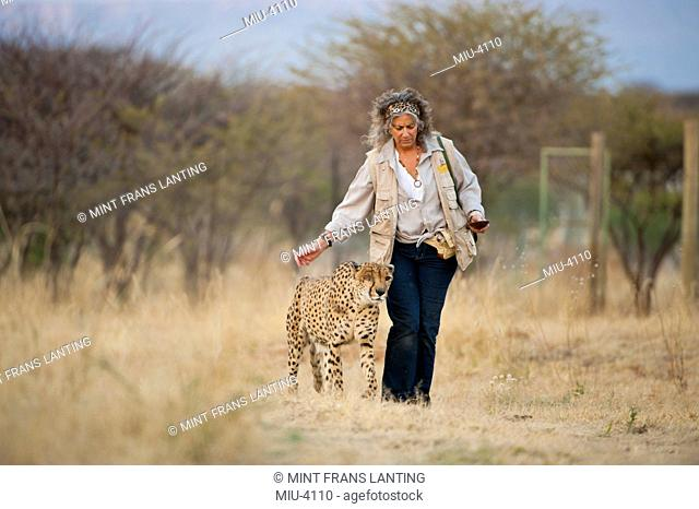 Animal conservationist with cheetah Cheebaka, Acinonyx jubatus, Cheetah Conservation Fund, Namibia