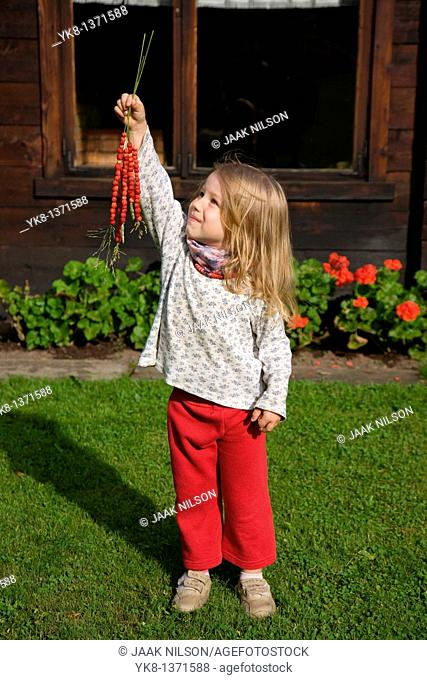 Three Years Old Girl Holding Strawberries on Grass Straw