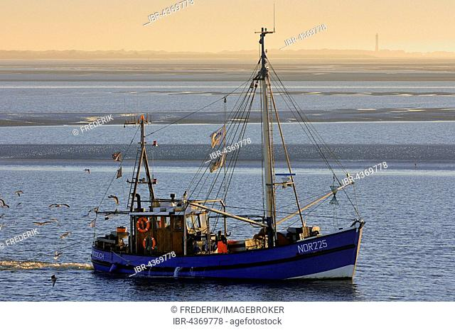 Shrimp boat on the Wadden Sea in front of Norderney, North Sea, Lower Saxony, Germany