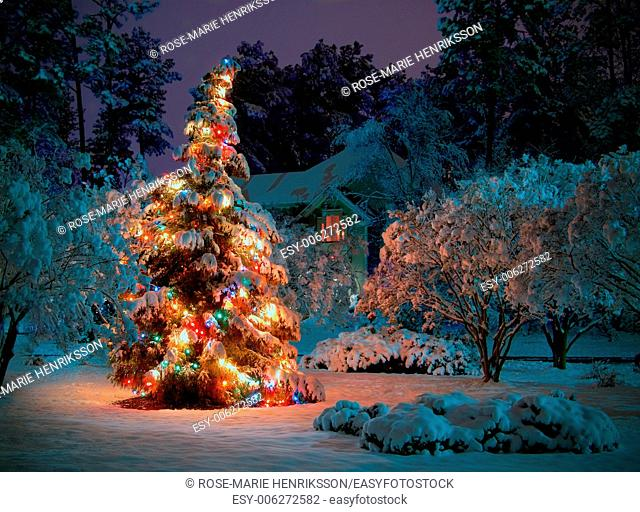 Snow covered outdoot Christmas tree with multicolored lights