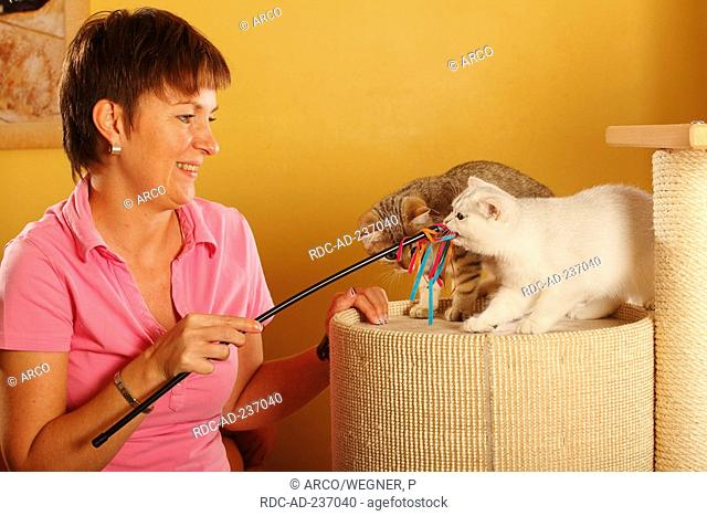 Woman and British Shorthair Cat, silver-shaded / toy