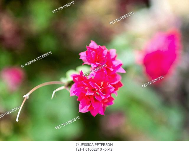 View of pink tropical wildflower