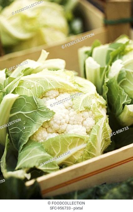 Cauliflowers in crates
