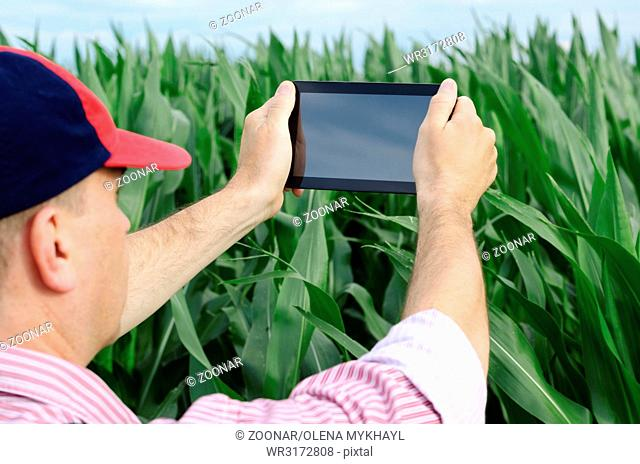 Farmer with tablet inspecting corn field