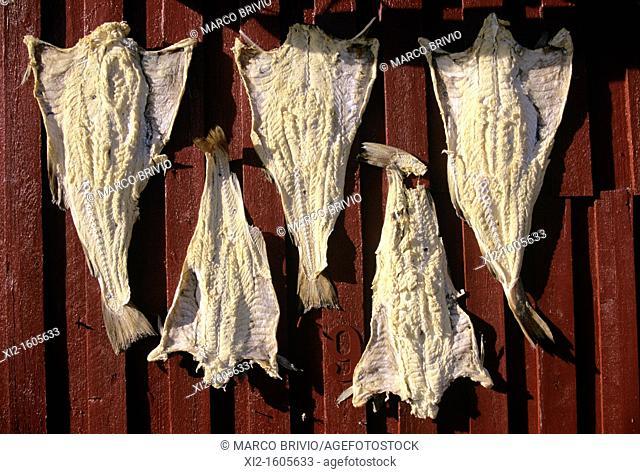 Dried cod, Lofoten, Norway
