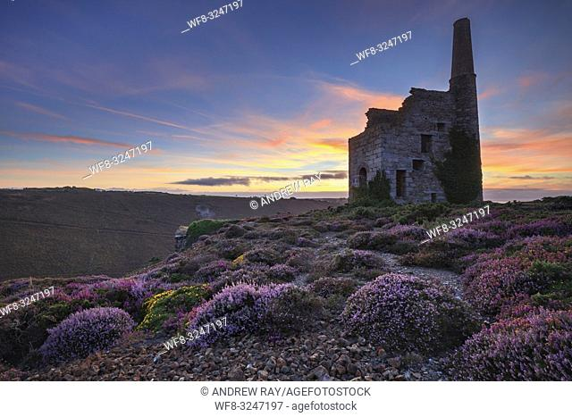 Heather at Tywarnhayle Engine House near Porthtowan in Cornwall, captured at sunset in late August using a wide angle lens