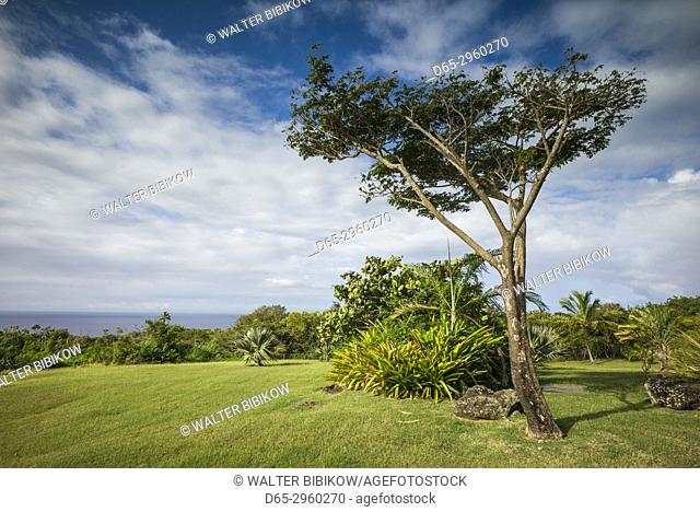 St. Kitts and Nevis, Nevis, Cole Hill, field