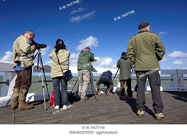birdwatchers, Belgium