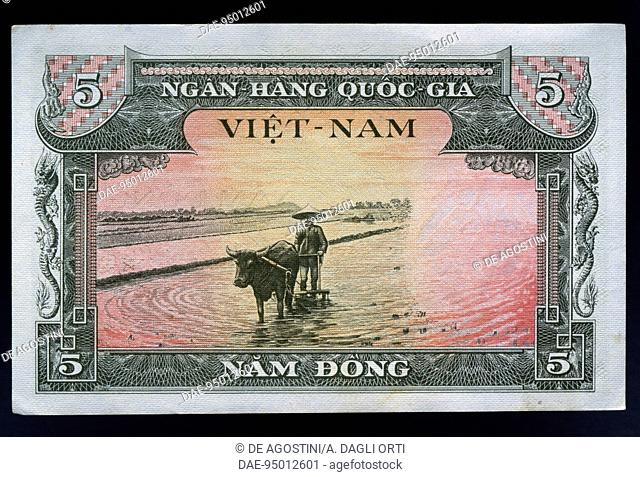 5 dong banknote, 1956, reverse, plow pulled by buffalo in a rice paddy. South Vietnam, 20th century