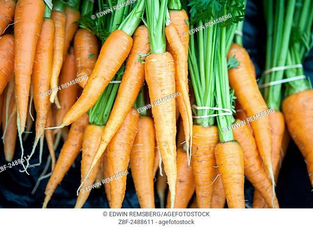 Bundles of freshly picked carrots
