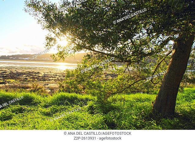 Sunset in La Toja Island (Pontevedra, Galicia, Spain)