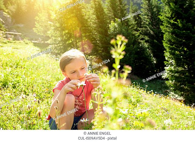 Young girl in field, looking at flower