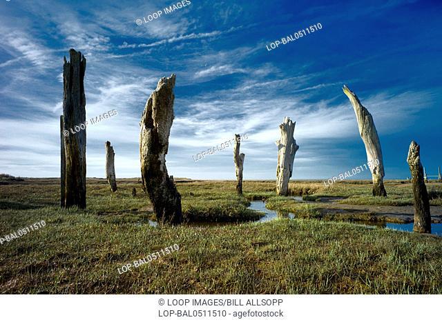 Thornham Stumps on the North Norfolk coast