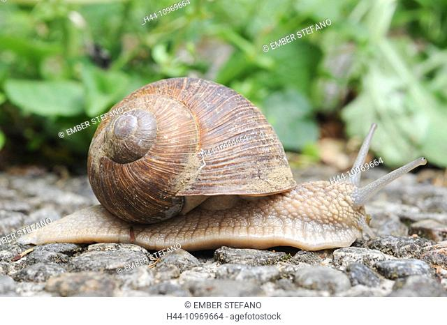 animal, animals, antenna, bark, biology, brown, close, close-up, detail, macro, mollusc, natural, nature, one, outdoors, shell, slimy, slow, small, snail