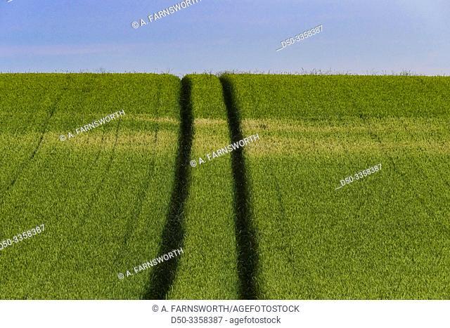 Hirtshals, Denmark Fields of wheat