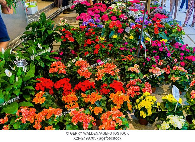 Display of flowers and plants in the Ghent flower market (Kouter), Belgium