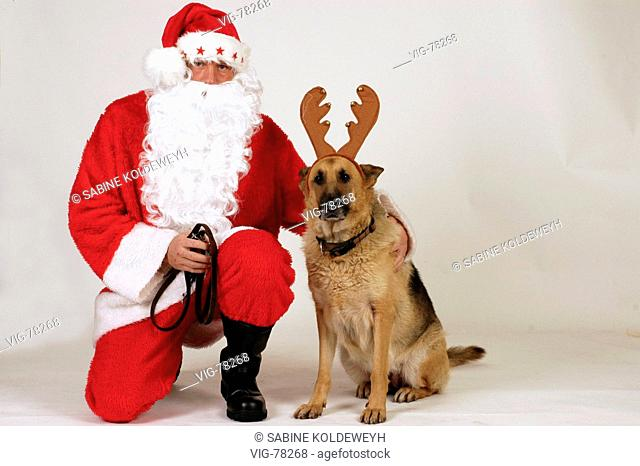 08.12.2004, Santa Claus with a as reindeer masquerades German shepherd dog. - 08/12/2004