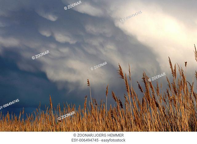 Storm ahead, Lake Neusiedl, Austria