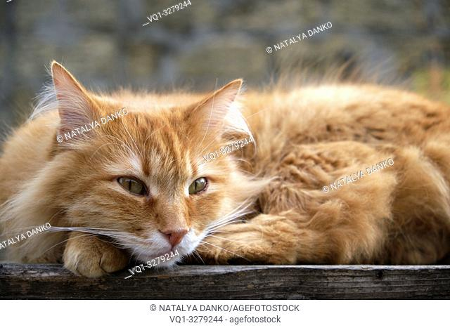 red cat sleeping on a wooden surface, close up