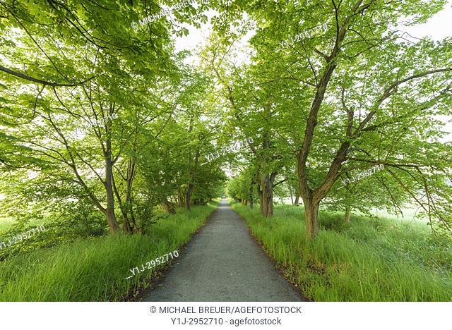 Grove in Springtime, Hesse, Germany, Europe