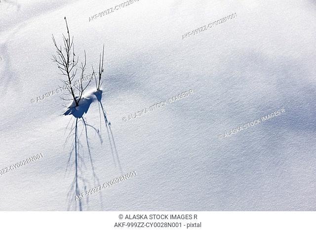 Detail of a small tree poking up through the snow and its shadow, Southcentral Alaska, Winter