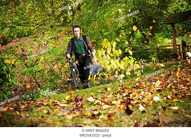 A gardener using a leaf blower to clear up autumn leaves in a garden