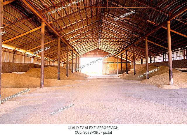 Stacks of harvested grain in agricultural barn