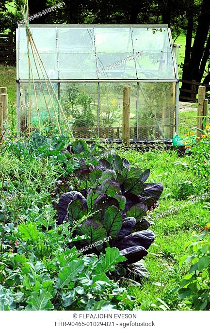 Vegetable garden with greenhouse, England