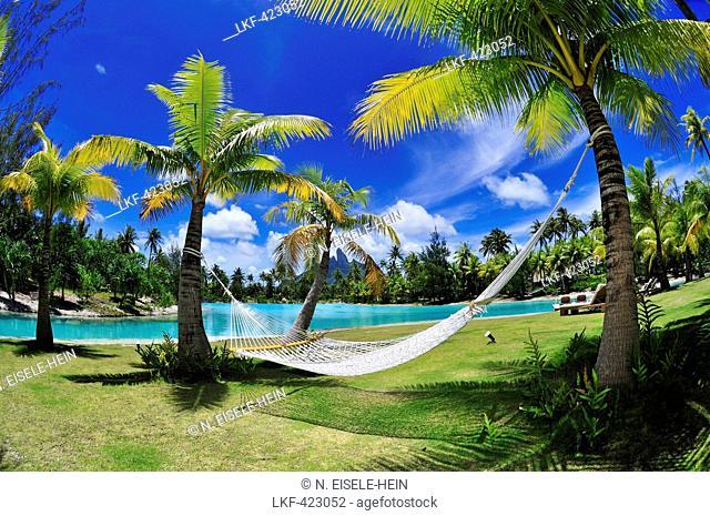 hammock between two palm trees saint regis bora bora resort bora bora society bora bora disco beach platja den bossa ibiza balearic islands      rh   agefotostock