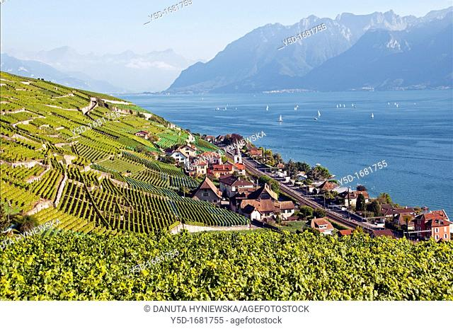 View for Lavaux vineyards and Geneva Lake, Alps in the background, canton Vaud, UNESCO heritage, Switzerland