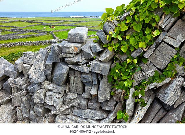 Clochan na Carraige Hut  Inishmore Island, Aran Islands, Galway County, West Ireland, Europe