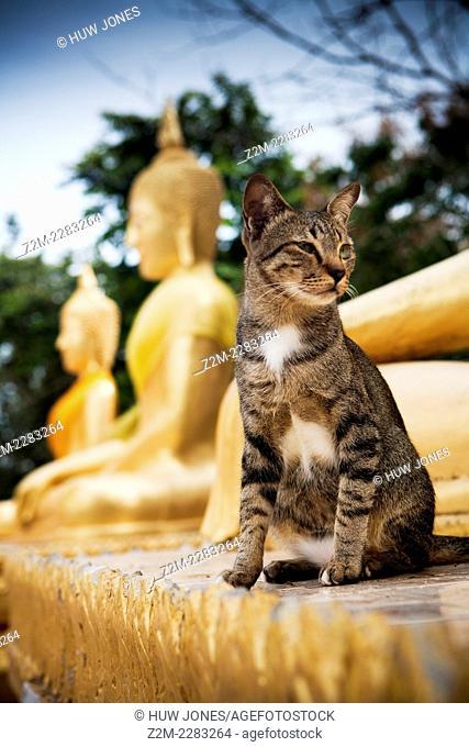 Temple cat sits by Buddhas, Wat Phra Yai temple. Khao Phra Bat hill overlooking Pattaya city, Chonburi province, Thailand