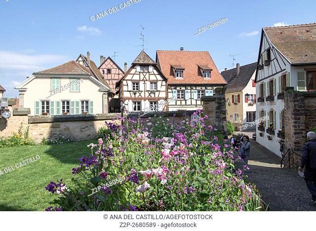 Eguisheim village, traditional colorful houses in Alsace, France