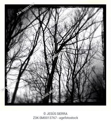 Trees, Casa de Campo, Madrid, Spain